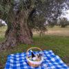 Oleoturismo_toledo_pla_picnic